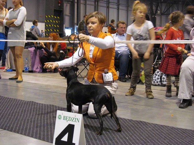 EXPO SILESIA DOG SHOW