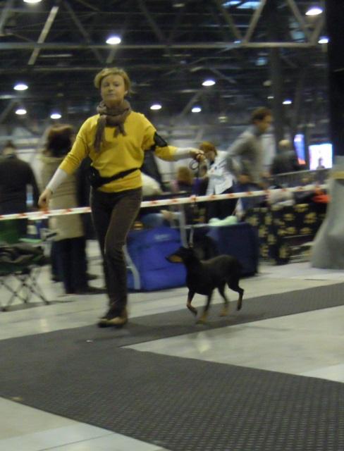 EXPO SILESIA DOG SHOW BĘDZIN