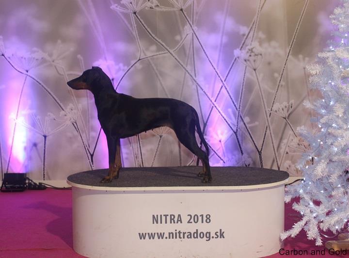 MIĘDZYNARODOWA WYSTAWA PSÓW RASOWYCH - NITRADOG - Nitra (SK)