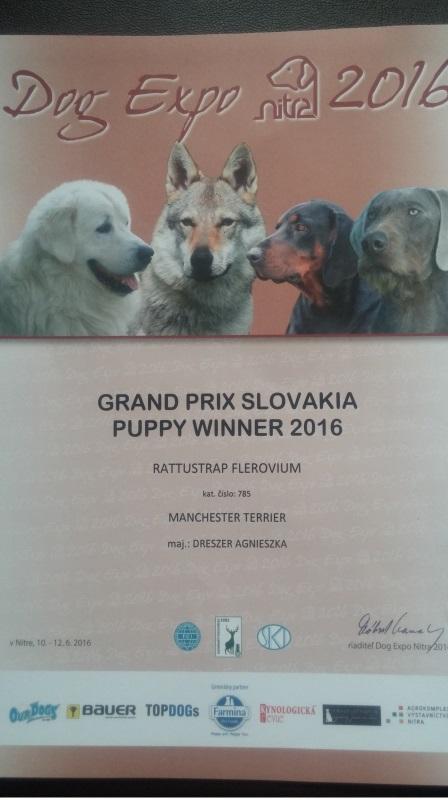 DOG EXPO - DUO CACIB NITRA 2016 (SK)