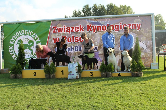 54th NATIONAL DOG SHOW IN CHORZOW