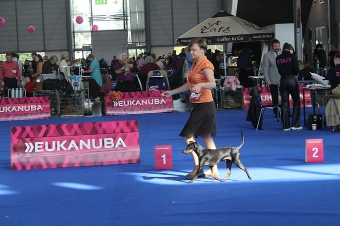 EUROPEAN DOG SHOW BRNO (CZ)