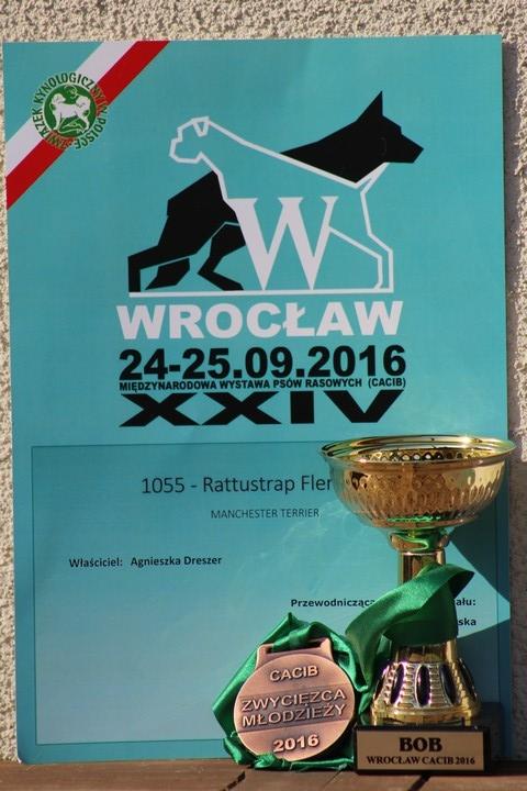 WYSTAWA PSÓW RASOWYCH - CACIB WROCŁAW (PL)