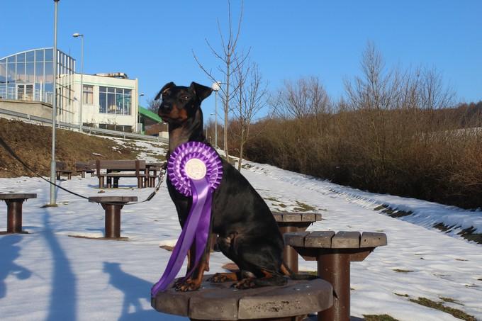 WINTER DOG SHOW BUDAPESZT