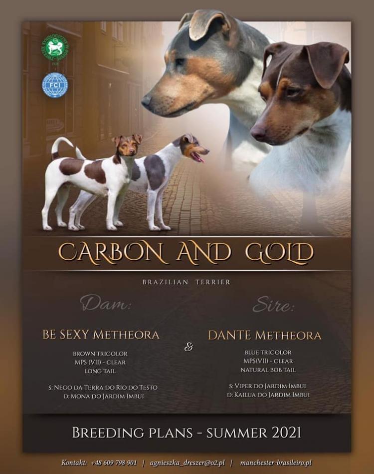 Breeding plans - brazilian terriers